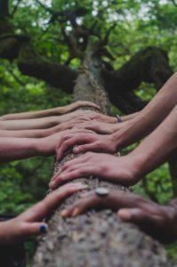 Ihmisten käsiä puun rungolla